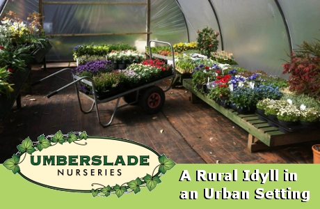 Umberslade Nurseries - A Rural Idyll in an Urban Setting