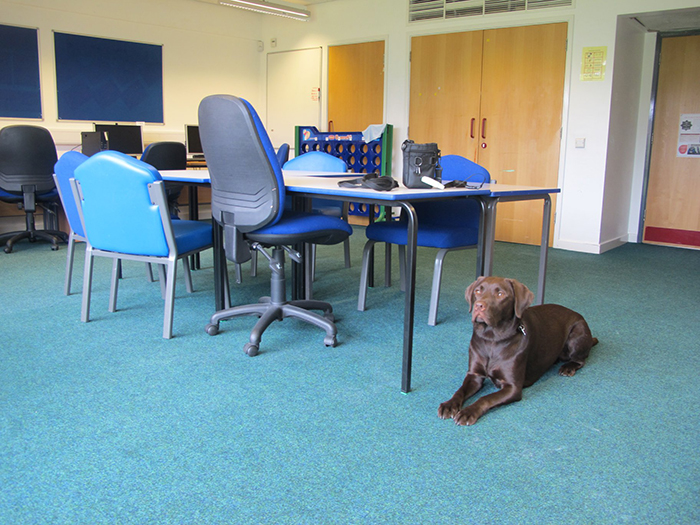 Buddy Dog Rufus laying in one of the newly converted classrooms in our Bradbury Centre