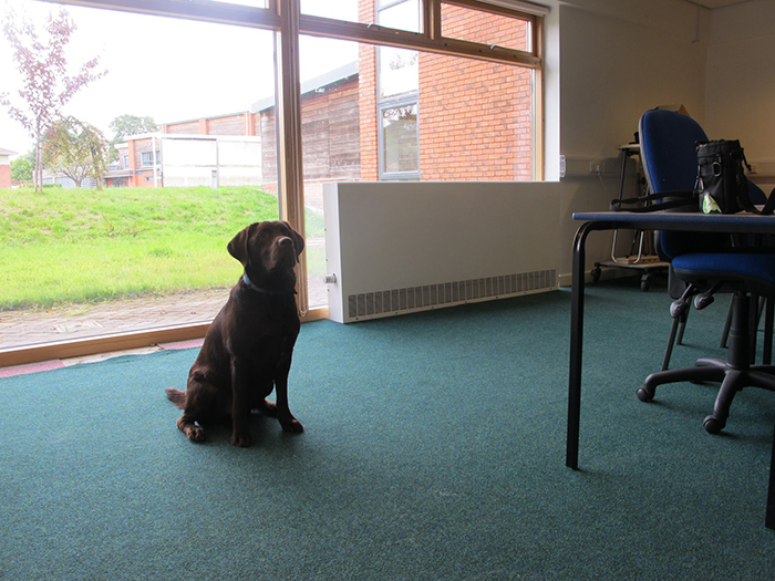 Buddy Dog Rufus Sitting in one of the converted classrooms as part of our Campus Expansion Programme