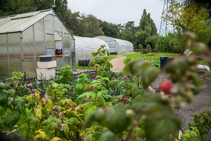 Image of greenhouses and plants at Umberslade Nurseries