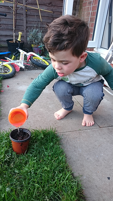 Young child watering seeds planted in a pot